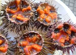 erizos de mar...sea urchins
