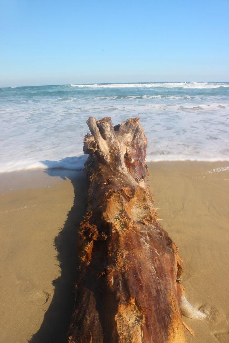 Fotografía Tronco marino por Daniel Fuentealba en 500px