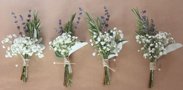 buttonholes senecio - Google Search