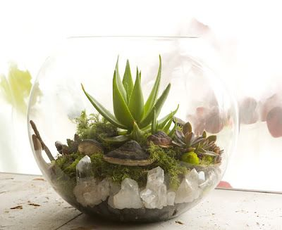A terrarium from Artemisia in Portland!