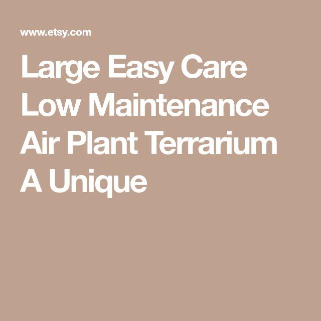 Large Easy Care Low Maintenance Air Plant Terrarium A Unique