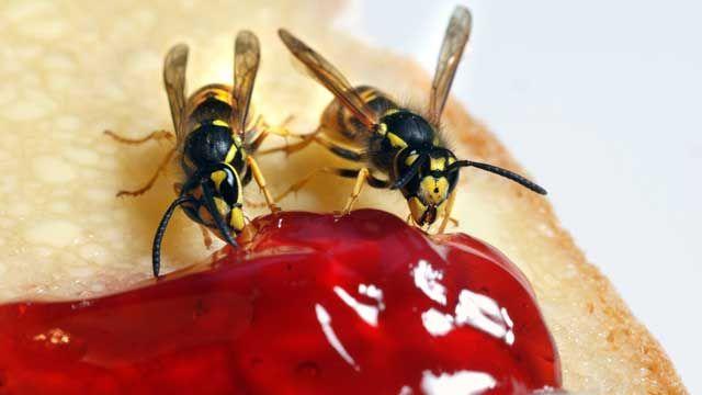Wespen kann man mit ein paar Tricks von Nahrungsmitteln fernhalten. (Quelle: imago/Hans-Günter Oed)