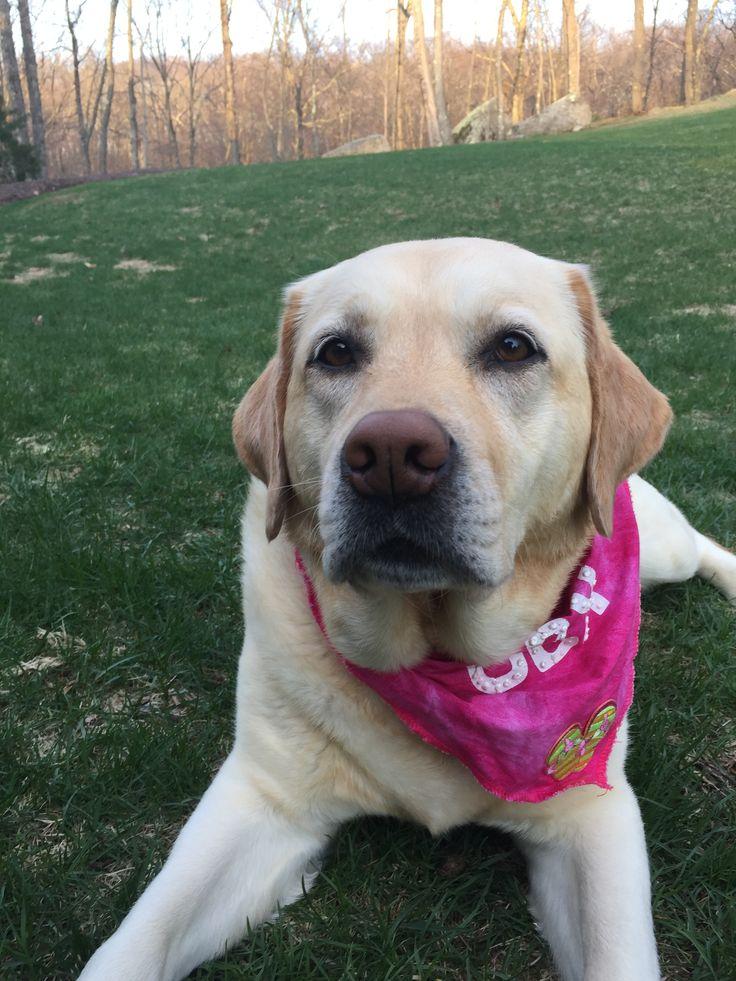 dontworrybhappii Doggy, Labrador retriever, Animals