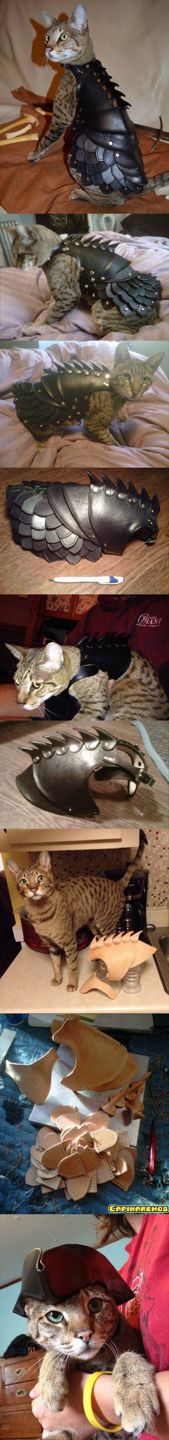 Esse é o gato guerreiro.