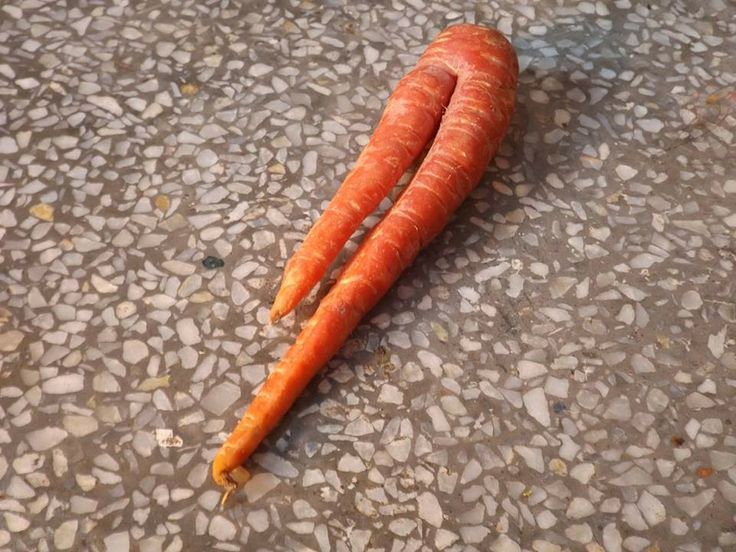 2 Leg Carrot by Shubham Kashyap on 500px
