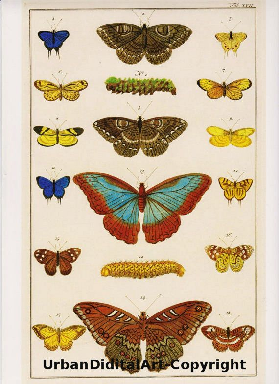 Vintage Butterfly Book Print This is a crisp high quality