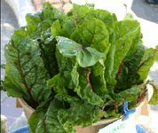 Health benefits of Swiss chard    Swiss chard, like spinach, is the store-house of many phytonutrients that have health promotional and disease prevention properties