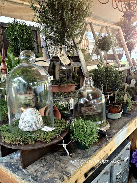 Terrariums, cloche, spring flowers, gardening, flower arrangement, tablescapes, table decor, greenhouse, topiary