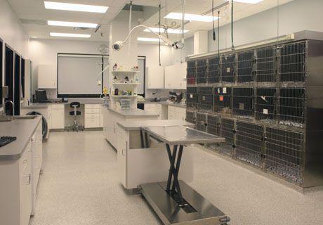 animal hospital design | Munster Animal Hospital - veterinary hospital treatment room