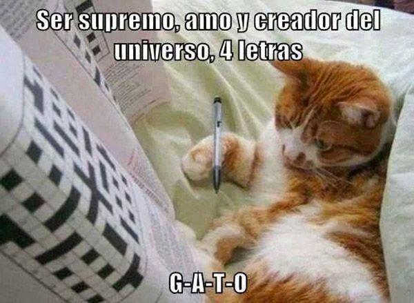 Ser supremo, amo y creador del universo, 4 letras. G-A-T-O-