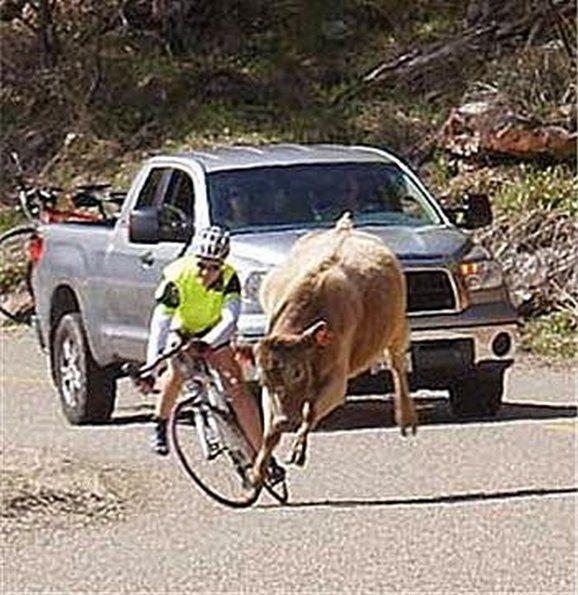 funny-crazy-stupid-bike-i_28