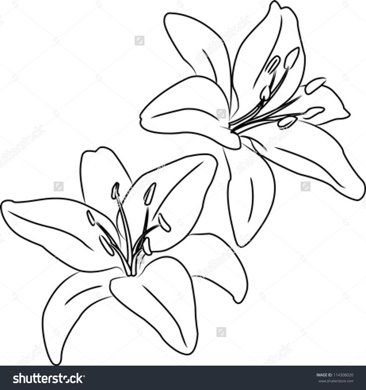 Best 25 Flower Drawing In Pencil Ideas On Pinterest