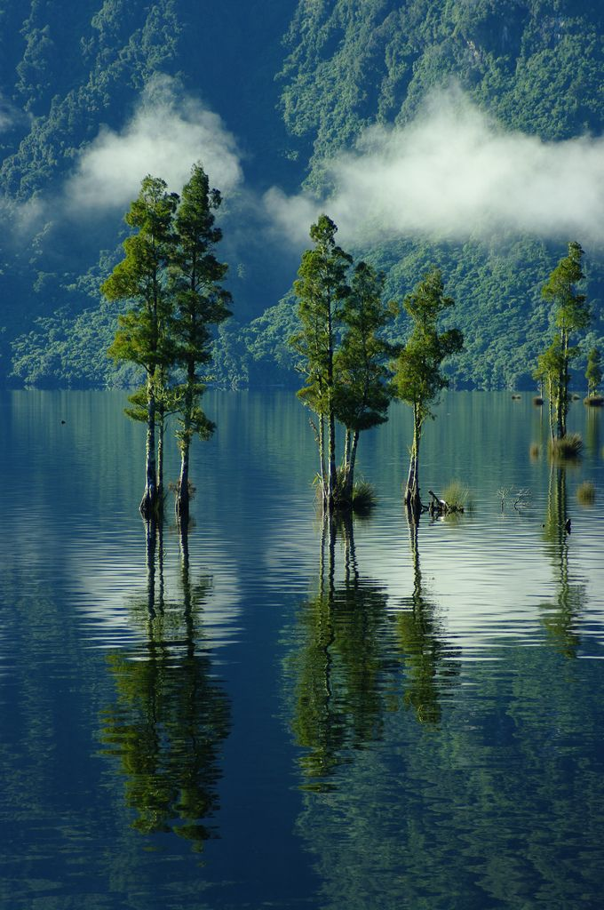 Mitchels Lake, New Zealand: Mitchells Lake, Reflection, Nature, Lakes, Trees, Newzealand, West Coast, Places, New Zealand