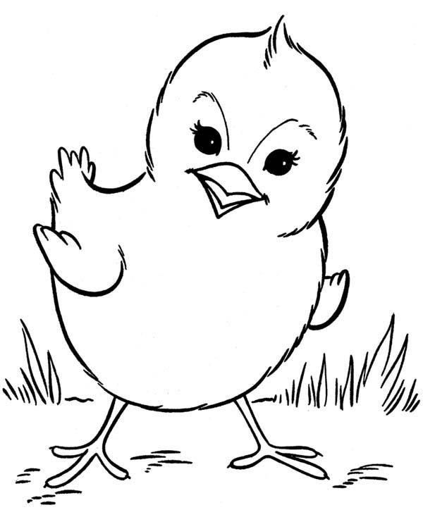 Chicken Picture Of Little Chicken Coloring Page Chicken Coloring Animal Coloring Pages Farm Animal Coloring Pages