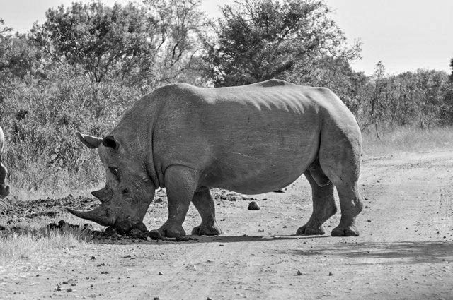 I Love Kruger Park Wildlife Photography