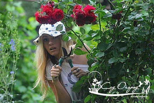 КАК БЕСПЛАТНО РАЗДОБЫТЬ ЦВЕТЫ ДЛЯ ДАЧИ И ПРАВИЛЬНО ИХ РАЗМНОЖИТЬ  Иногда проходишь мимо клумбы в городе, да остановишься: столько красивых цветов! Вот т... - Сад огород - Google+