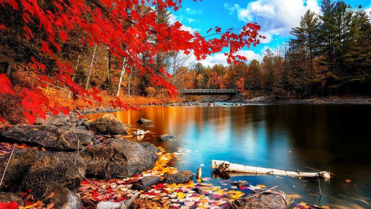 www.GetBg.net_Nature___Seasons___Autumn___Red_autumn_041232_.jpg (1920×1080)