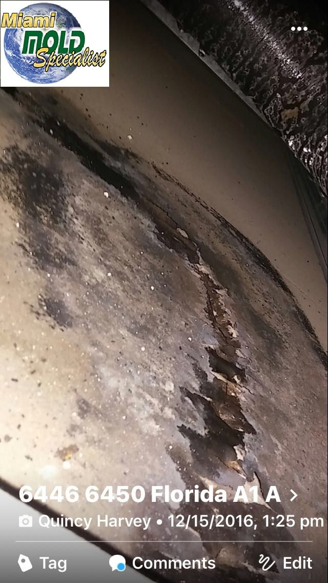#MoldRemediation #BlackMold #Removal #Crawl #Space #MoldRemoval #AtticMoldRemoval#MildewRemoval #MoldAssessment #MoldInspection #MoldEvaluation #MoldDetection #MoldRestoration #CleaningSpecialist #IAQ #miamimoldspecialist.com