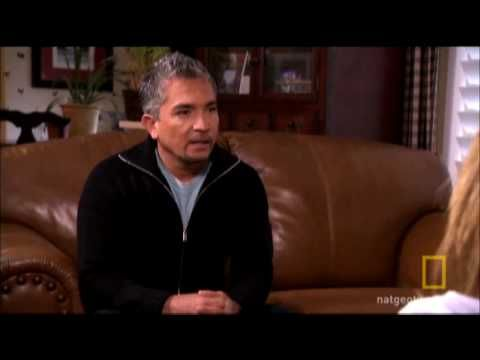 Cesar Millan, The Dog Whisperer, gives wise advice on how to have a happy, healthy, canine member of the family.