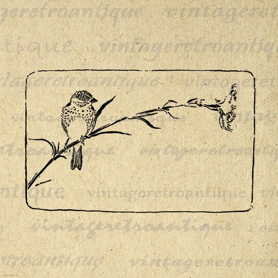 Printable Finch Bird Image Graphic Digital Download Artwork Antique Clip Art. High resolution digital image illustration. This high quality printable digital graphic works well for iron on transfers, printing, tea towels, papercrafts, and many other uses. Real vintage artwork. Great for use on etsy items. This graphic is large and high quality, size 8½ x 11 inches. Transparent background PNG version included.