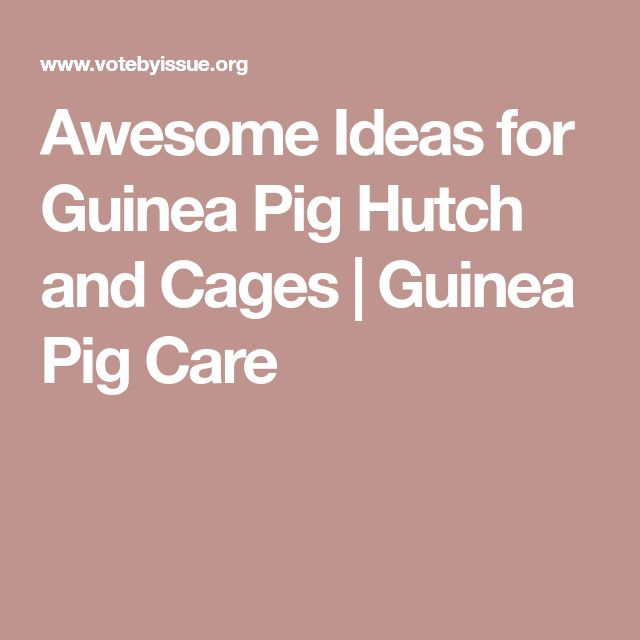 Awesome Ideas for Guinea Pig Hutch and Cages   Guinea Pig Care