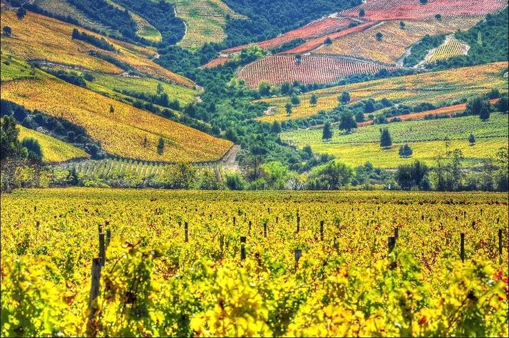 Valle de Colchagua--Chilean Wine Country