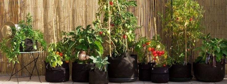 Ogródek na balkonie | Własne kwiaty, zioła i warzywa bez ogrodu i działki... Po prostu ekologiczne miejskie ogrodnictwo .