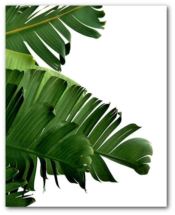 Banana Leaf Print Abstract Tropical Leaf Summer Art