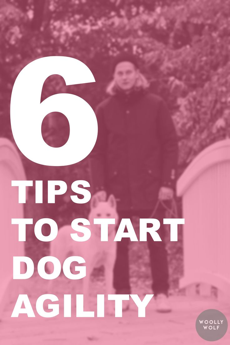 6 Tips to Start Dog Agility, dog training ideas. Dog hobbies, dogs that hike. Click and read!