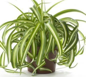 Lucht Zuiverende planten http://www.bedrock.nl/2016/09/22/7-kamerplanten-die-de-lucht-zuiveren-en-weinig-verzorging-nodig-hebben/