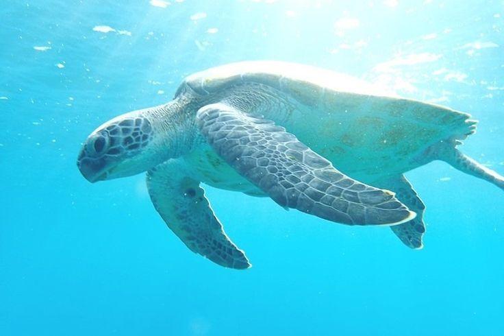 16 de junio, Día Mundial de las Tortugas Marinas 2017