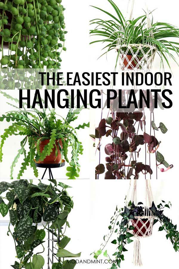 The Best Indoor Hanging Plants Low Maintenance Care Hard To