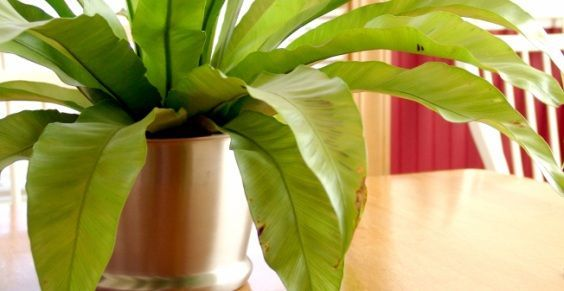 piante_inquinamento_domestico  <3