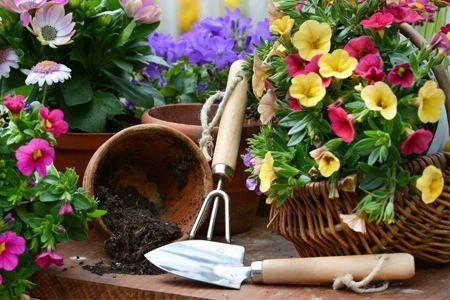 Strumenti indispensabili per la cura del vostro giardino e orto, che sia urbano o no non è importante. Importante è che sia come lo avete immaginato. Ampia gamma di prodotti per giardino e orto . Visita la nostra pagina per vedere tutto quello che abbiamo per la cura dei vostri spazi verdi... www.campionestore.com