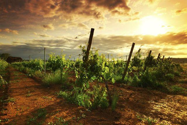 Grover Vineyards tour, Nashik, Maharashtra & Nandi hills in Bangalore