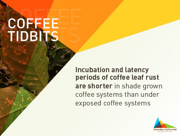 Don't forget to signup at www.colombiancoffeehub.com to get fresh content from origin.