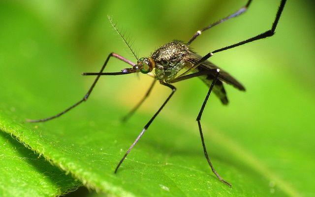 4 természetes trükk, amivel megvédheted gyermeked a rovarok támadásától