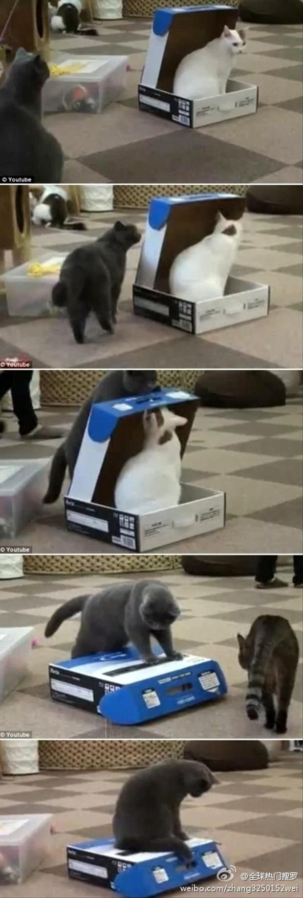Funny Cats In The Box