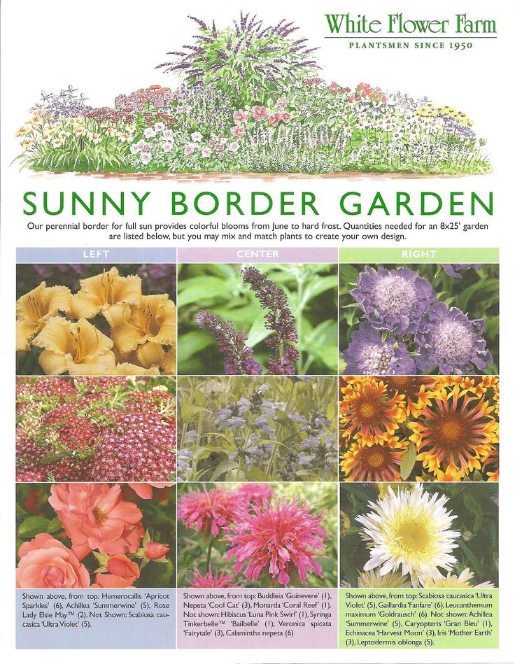 Sunny border garden plan plan full of colorful blooms for Sunny landscape designs