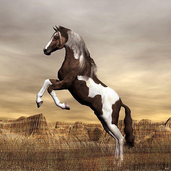Awesome Rearing Wild Dark Brown Mustang Paint Stallion ...
