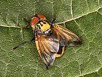 EU-Pestizid-Bann im Kampf gegen das Bienensterben