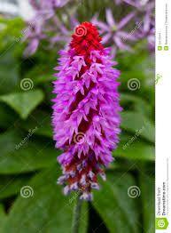Risultati immagini per fiori tropicali
