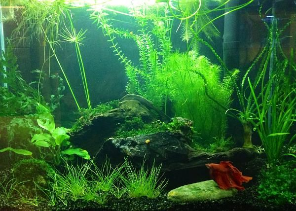 694 best planted nano tanks images on pinterest fish for Betta fish tank size