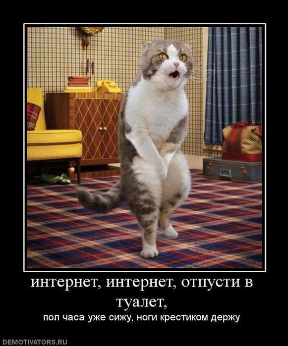 Демотиваторы две кошки