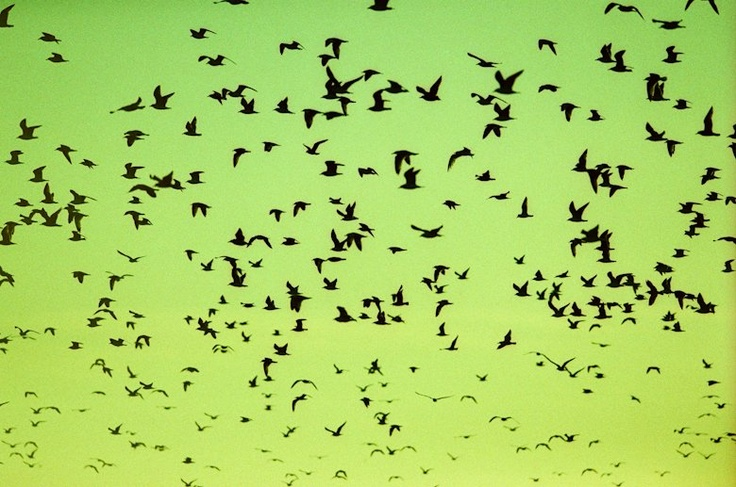 I saw a flock of birds flying north today.If they can move on after summer ,so can I.