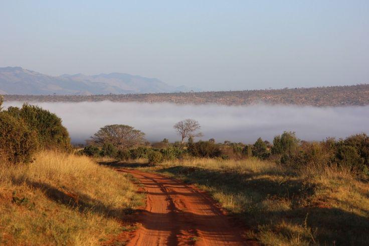 Pomysł na wakacje zimą? Safari w Kenii!  #safari #kenia #afryka