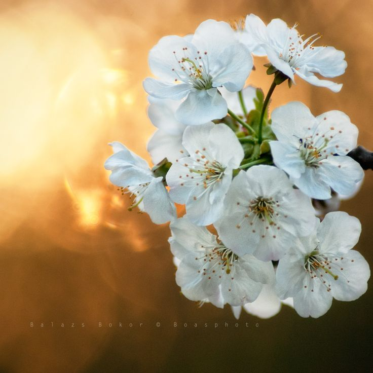 Spring art by Balázs Bokor © Boasphoto on 500px