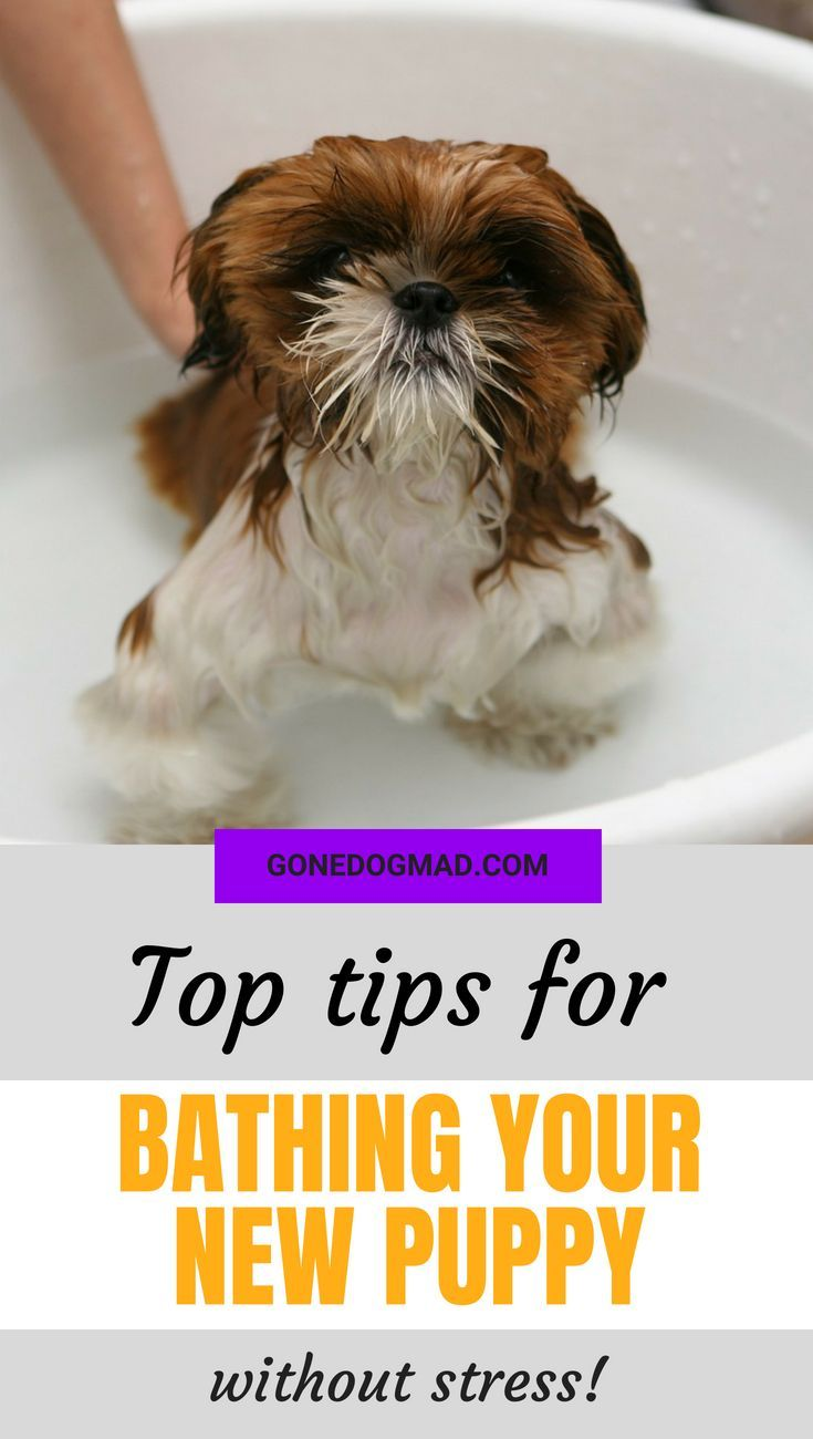 Giving A Puppy A Bath Top Tips For A Stress Free Bath Time