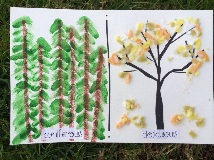 Coniferous and deciduous {forest / habitats} for our 1st grade classroom.