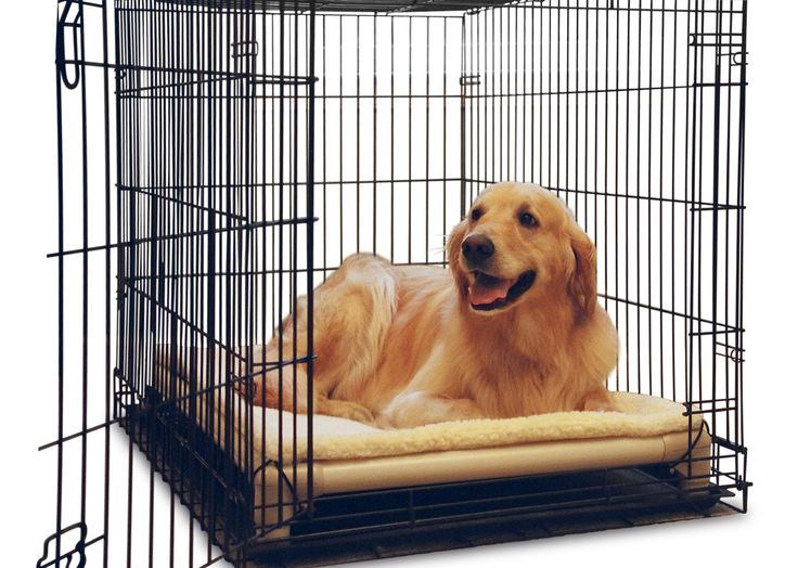25 Best Doggie Day Care Dreams Images On Pinterest